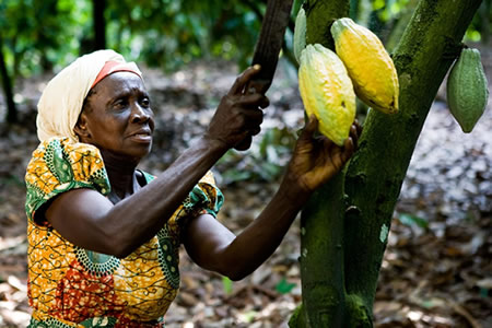 Parliament Urges Increased Support To Cocoa Farmers