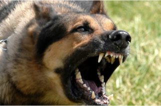 Three Rabies Cases Confirmed In Kpone-Katamanso Municipality