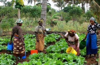 Ghana Prepares Agriculture Sector To Adapt To Climate Change