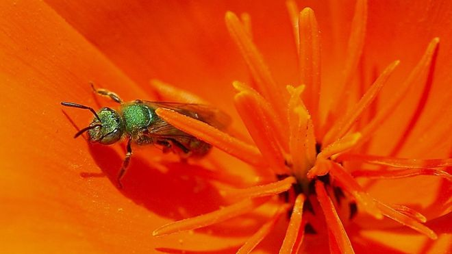 Taiwan Doctor Finds Four Sweat Bees Living Inside Woman's Eye