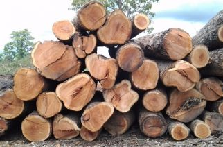 China Bans Illegal Timber Imports From Ghana