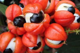 Ackee – Discovering A Unique Ghanaian Fruit That Is Surrounded By A Myth