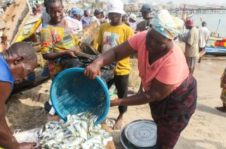 Photos: The Business of Fish In Accra's Oldest Fishing Harbor