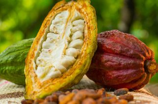 Ghana To Produce Fine Flavour Cocoa Soon With New Lab And Quality Training Centre