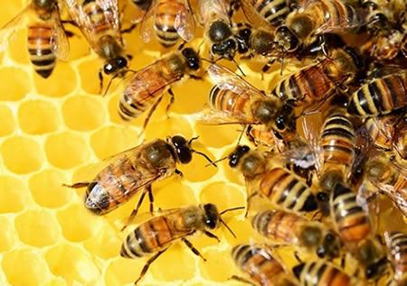 Bees Kill Man At Drinking Spot