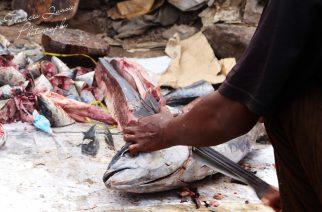 Eating Fish In Ghana Is Harmful!